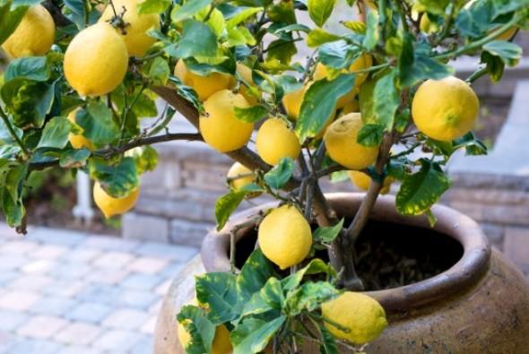 Как вырастить экзотические растения дома Женский сайт - ladyjolly.ru
